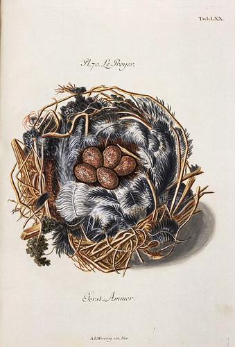 009-Nido de Ave de Rapiña-Colección de nidos de aves 1772