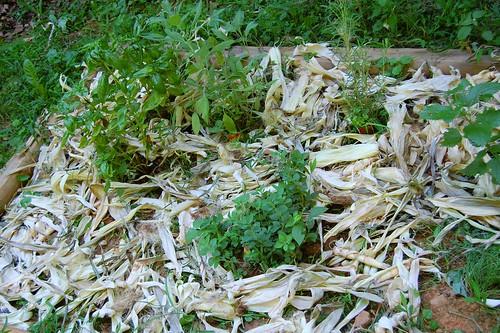 corn husk mulch