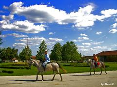 Ergela na Kelebiji (Almira MasteR Photography) Tags: serbia casio subotica exilim vojvodina srbija konj konji ergela kelebija