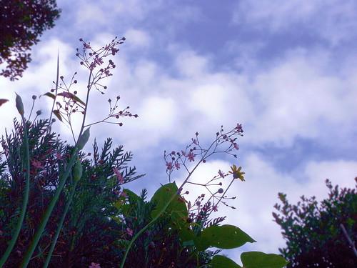 Flower-018