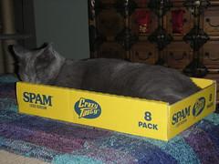 SPAM (idalingi) Tags: pet cat box sweetpea