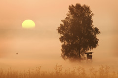 YET ANOTHER SINGLE TREE (fuchsphoto) Tags: morning light sun mist bird nature fog sunrise gold early warm glow nebel natur contest atmosphere silence catches worm photocontest sonne morgen homepage baum singletree stimmung vogel mund dunst hochsitz ruhe morgenstund kwerfeldein fotowettbewerb einzeln fuchsphoto flickrswarmlighting landschaftatelierfuchs