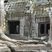 Ta Phrom - Angkor Complex - THE UNCOVERED KINGDOM