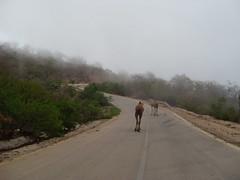 Camels in Dhofar (Ozear AL-Zadjali) Tags: