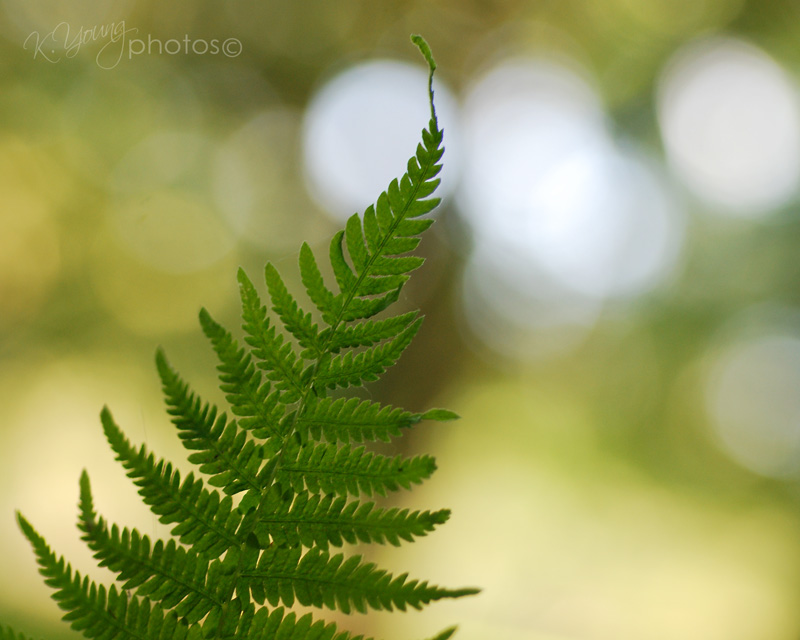 Fern with bokeh