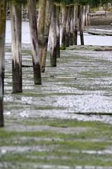 poles (la5me) Tags: nature norway coast tide poles mywinners