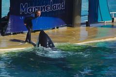 IMGP4902 (vivosi8) Tags: shark dolphin requin sealion 06 parc dauphin killerwhale antibes marineland otarie manchot alpesmaritimes orque