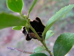 La casita de la araa 1 (esta_ahi) Tags: barcelona espaa fauna spider spain flora araa arachnida peneds  cantallops