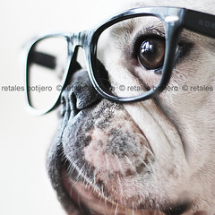 chula ( retales botijero) Tags: pet canon puppy french 50mm glasses images bulldog getty gafas frances bf chula francs gafapasta jaguara 450d bifocales