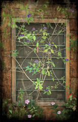 Chania window 2 (Helena Amor) Tags: flowers wild house detail building texture window greece crete frame textured chania bej ultimateshot diamondclassphotographer flickrdiamond theunforgettablepictures selectbestfavorites