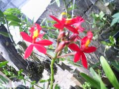 foto nilgazzola orquidea (nilgazzola) Tags: de foto ou com tirada maquina nilgazzola