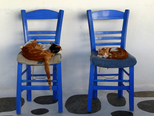 Cats in Mykonos, Greece