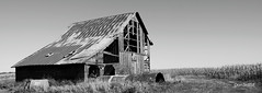 Lonely Barn (Don3rdSE) Tags: old sky blackandwhite bw building nature field architecture barn rural canon landscape eos corn october natural farm rustic iowa ia worn murray tinroof 50d mywinners abigfave canon50d platinumphoto theunforgettablepictures platinumheartaward goldstaraward don3rdse