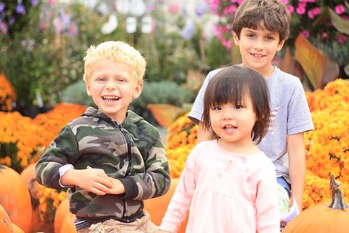 pumpkin patch 176