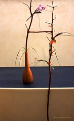 minimal ( Mago G ) Tags: plants canon eos bonsai blueribbonwinner composizioni eos450d sigma180 digitalrebelxsi gottardiclaudio tondingroup