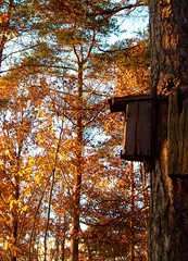 Birdhouse (Nin) Tags: autumn fall nature birdhouse hst fgelholk