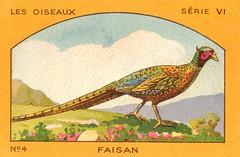 milliat oiseaux006