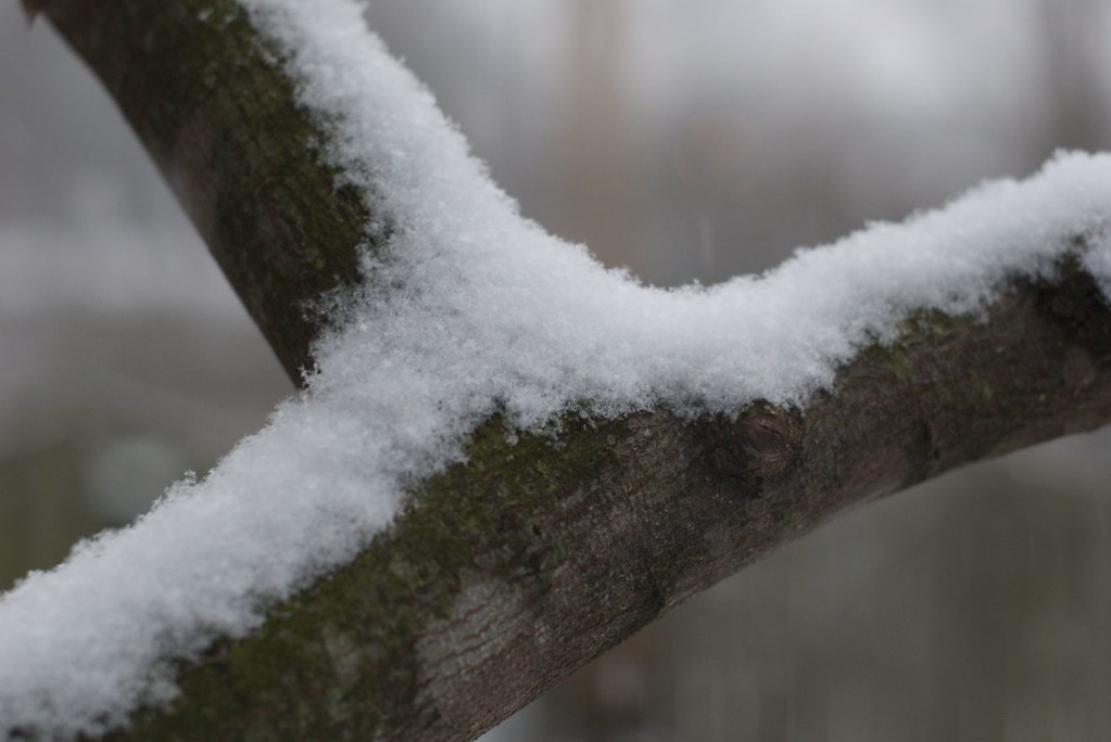 Snowy tree limb
