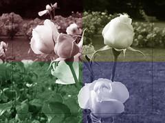um dia no park... (dr pieceofshit) Tags: park flowers parque flores four alive quatro