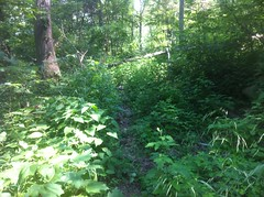 Chamberlain Trail Overgrowth