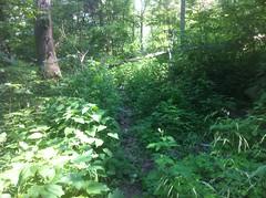 Chamberlain Trail Overgrowth