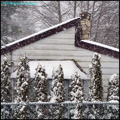West Coast Winter 6 (Beachhead Photography(Is in standby mode)) Tags: beachheadphotography winter snow snowing trees fence hedge cedars building house roof chimney lines