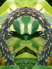La passion du christ (christine chardon) Tags: fleur flower être vivant nature plante botanique étrange masque composition portrait fantastique surnaturel personnage imaginaire apparition mystérieux souffrance épines