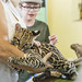 Ocelot Gamboa Wildlife Rescue pandemonio 2017 - 01