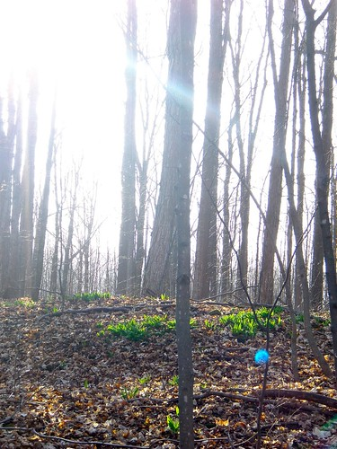 The Sacred Grove (sunshine)