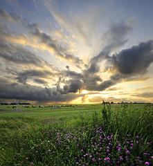Under the sunset sky (Dani℮l) Tags: sunset horses sun holland nature netherlands clouds rural landscape golden daniel nederland sigma pasture groningen friesland weiland lauwersmeer zoutkamp d300 10mm munnekezijl kwelderweg