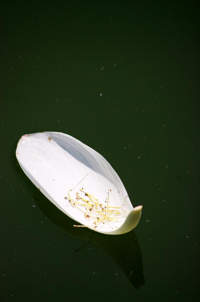 湖西荷拍~DA55-300mm分享