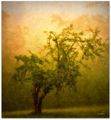 }}}} alone {{{{ (xandram) Tags: texture field fog photoshop alone legacy appletree theunforgettablepictures graphicmaster redmatrix