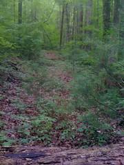 14 - Trail