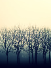 Remastered Week - Day 1 (Michelle in Ireland) Tags: morning trees mist fog dead haze edited bare foggy crossprocessing trunks hazy leafless thick dense treetrunks taketwo themeweek challengeyouwinner exhibitionphoto flickrfatale remasteredweek