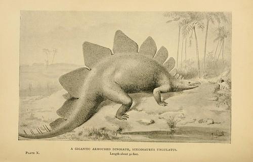 A Gigantic Armoured Dinosaur, Stegosaurus ungulatus