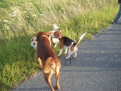 wilde Horde2 (manopet) Tags: dog collie hund mano meldorf torja