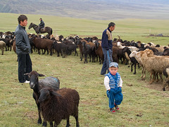 Looking for sheep (Evgeni Zotov) Tags: family boy people mountain man look animal kid search asia child sheep classmate shepherd uncle traditional father flock meeting son celebration pasture kyrgyz tradition kyrgyzstan herd herder kochkor kirghizistan kirgistan kirgizia herdsman jailoo kirgizistan kirgizi kirgisistan beshbarmak  kirguistan kirghizia krgzistan quirguisto     saralasaz   shamshy shamsy