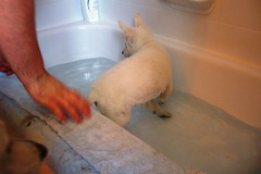 Happy's first bubble bath Aug. 5-1