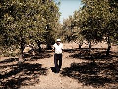 Un giorno in campagna (Simone Infantino) Tags: olive olympus campagna e1 nonno sicilia agrigento realmonte uliveto uliveti