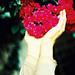 「希望」賑災義賣 -  Give You, My Dearest Heart 作者 火腿藝廊