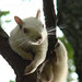 Yeah I'm an Albino Squirrel...So what? Get over it!