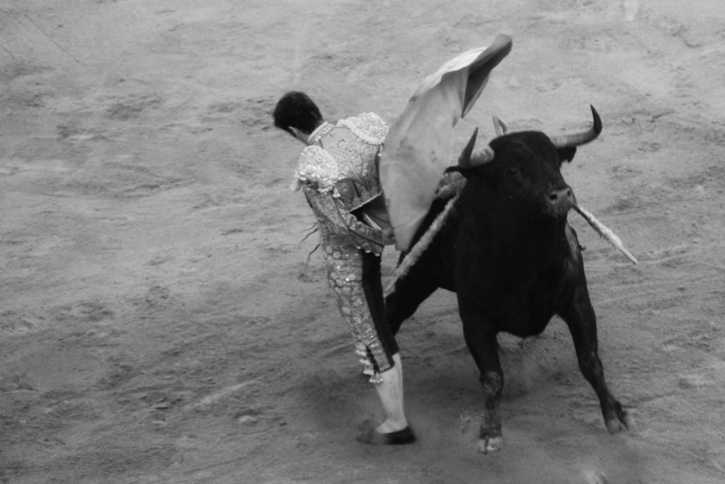 bull fight- backside