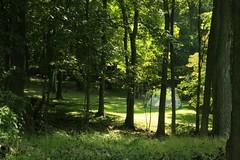 _MG_6405.JPG (zimbablade) Tags: trees sleepyhollow dougmiller videopoem