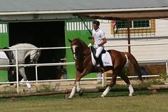 324_2496 (JUANLUBIS) Tags: horses horse sport canon caballo cheval caballos competition cavallo cavalo equestrian equine equus chevaux dressage equitation horserider galope domaclsica dressur equineart domaclasica horsesanddreams