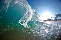 An ocean wave crashing onto beach at Monster Mush, north shore, Oahu, Hawaii (Sean Davey Photography) Tags: tube barrel curl tubing curling barreling seawaveenergyseaswellgreenpoweroceanpoweroceanenergyseawavewavesenergyoceanwavepicturesoceanswellpictureswaveoceanwavecurlcurlingwavepowerenergyalternativepoweralternativeenergygreenpowergreen shorebreakbeachsandpalmtreessunnyglittershimmershinyfoamshoreshorelinenorthshoreoahuhawaiiseandaveyseandaveyphotographyfinephotographyartphotographyfineartcolorhorizontalwave