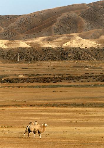 IMG_5730-w Camel