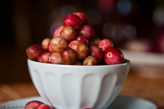 White Cranberries (Culinary Fool) Tags: fall fruits vegetables farmersmarket dr produce universitydistrict culinaryfool 0923 udist 2470mm28 udfm