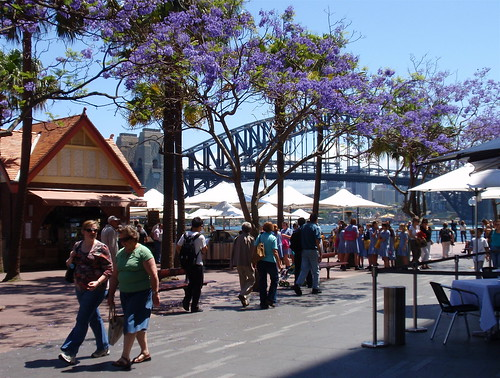 Jacarandas and Harbour Bridge