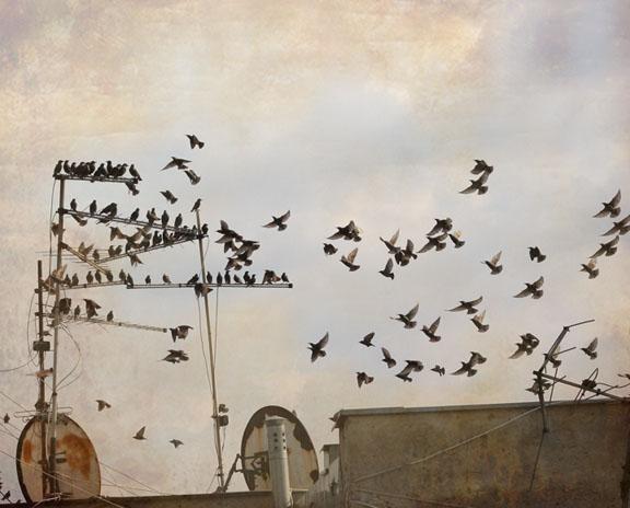 birds15