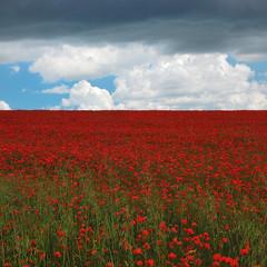 Remembrance (Stu Meech) Tags: blue storm field clouds square landscape stu sunday fluffy crop poppy poppies remembrance meech